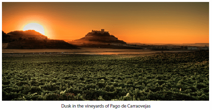 Dusk in the vineyards of Pago de Carraovejas