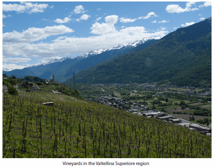 Vineyards in the Valtellina Superiore region