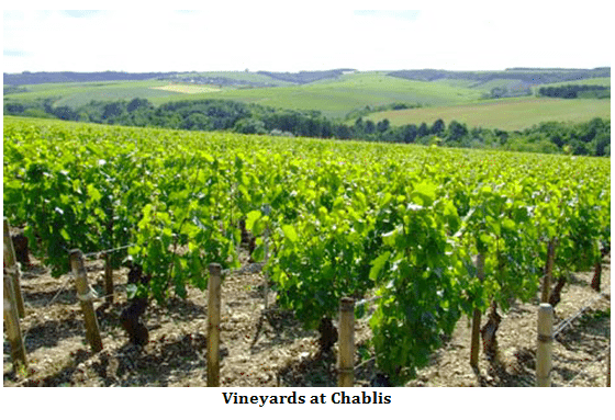 Vineyards at Chablis