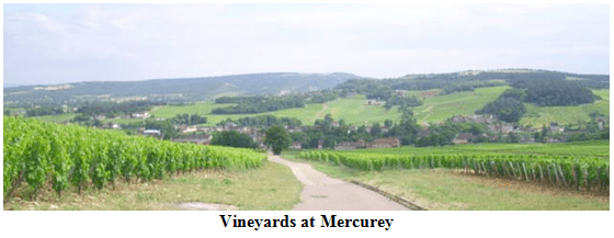 Vineyards at Mercurey