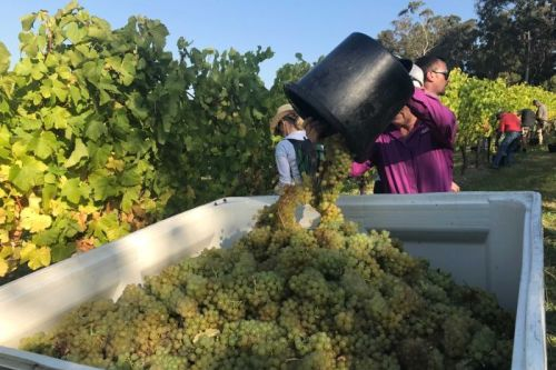 Supply and demand in global wine market balances out as glut eases