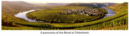 A panorama of the Mosel at Trittenheim