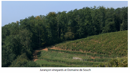 Jurançon vineyards at Domaine de Souch