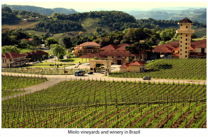 Miolo vineyards and winery in Brazil
