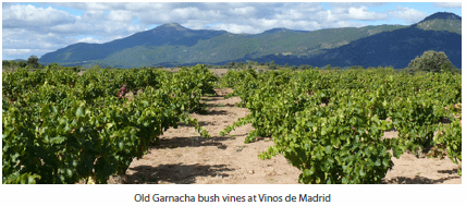Old Garnacha bush vines at Vinos de Madrid