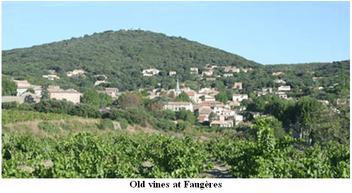 Old vines at Faugères