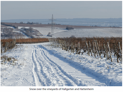 Snow over the vineyards of Hallgarten and Hattenheim