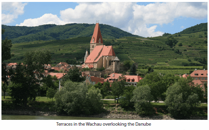 Terraces in the Wachau overlooking the Danube