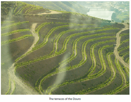 The terraces of the Douro