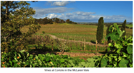 Vines at Coriole in the McLaren Vale