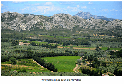 Vineyards at Les Baux de Provence