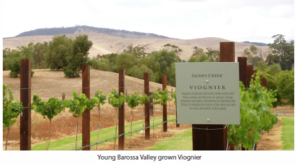 Young Barossa Valley grown Viognier