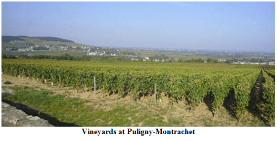 Vineyards at Puligny-Montrachet