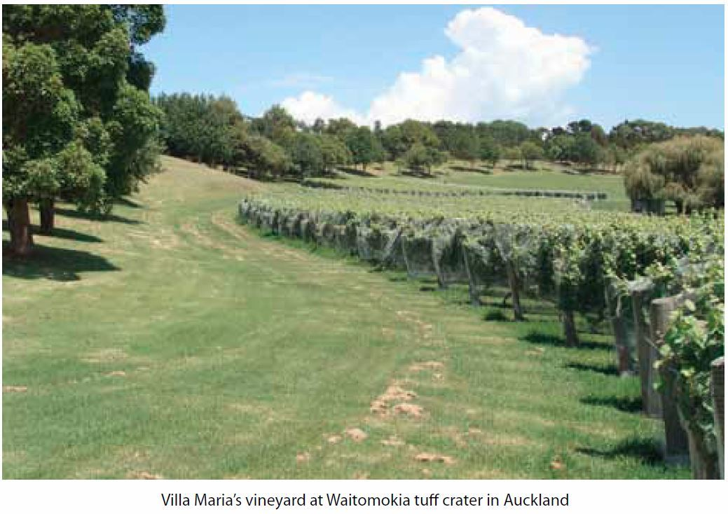 villa maria vineyard