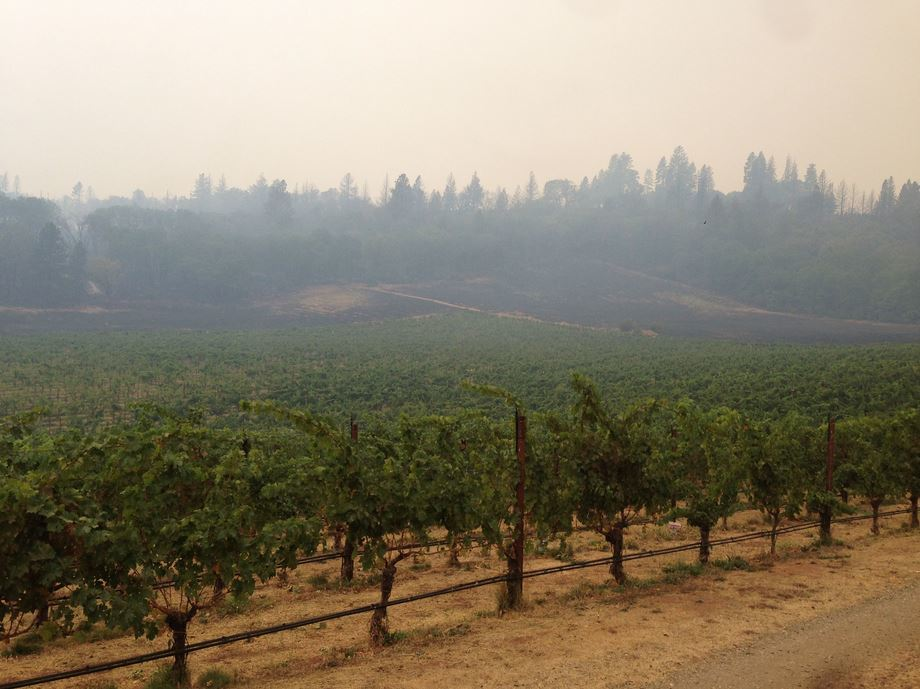 Though the Valley Fire fire charred hundreds of forest acres on Hawk and Horse Vineyards' 1,300-acre property, the 18-acre biodynamic vineyard was barely touched. Photographer: Tracey Hawkins/Courtesy of Hawk and Horse Vineyards