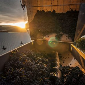 While pinot noir grapes have thin, sensitive skins, the varietal is not planted in Lake County. Photographer: Cultura RM/Preserved Light Photography/Getty Images