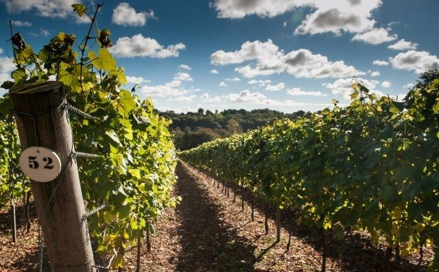 Hambledon Vineyard in Hampshire, which came top in the blind tasting. Source: thedrinksbusiness.com