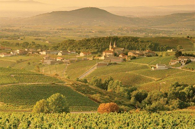 Mâcon vineyards in Burgundy Credit: From Decanter magazine Read more at http://www.decanter.com/wine-news/age-and-disease-threaten-burgundy-wine-shortage-report-warns-293784/#PBzFUDrHIxqeSStZ.99