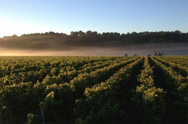 A new dawn for Bordeaux 2011?