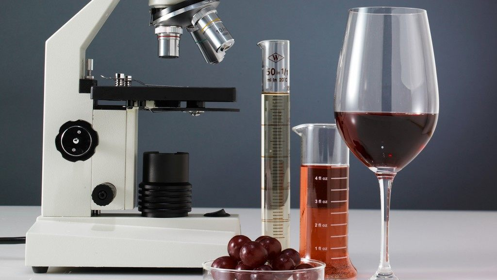 Resveratrol, a compound that protects plants from pathogens, is found in grape skins and wine. Photo by: James Worrell