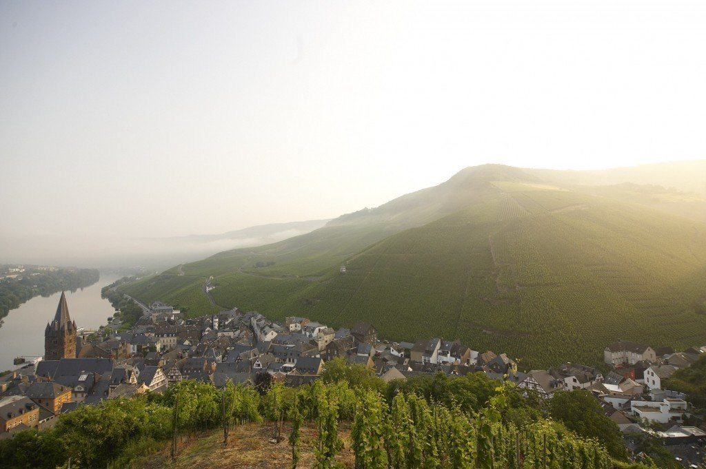 Sunrise at 'Doctor' vineyard in the Mosel, Germany