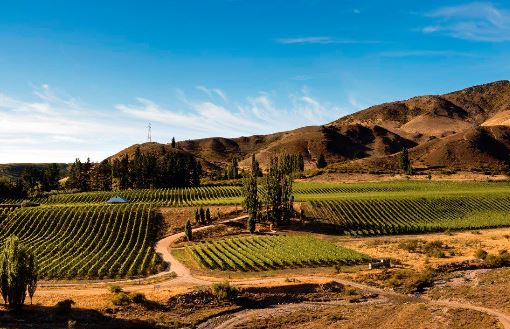 Two Paddocks Central Otago