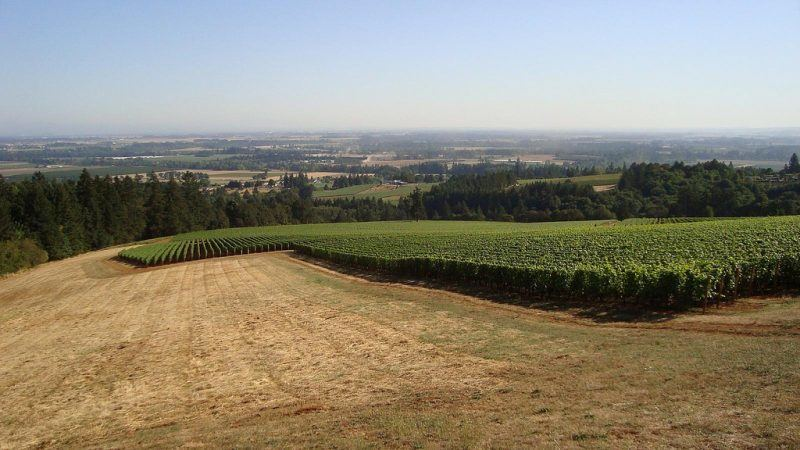 Wine_Country_of_the_Dundee_Hills,_Oregon