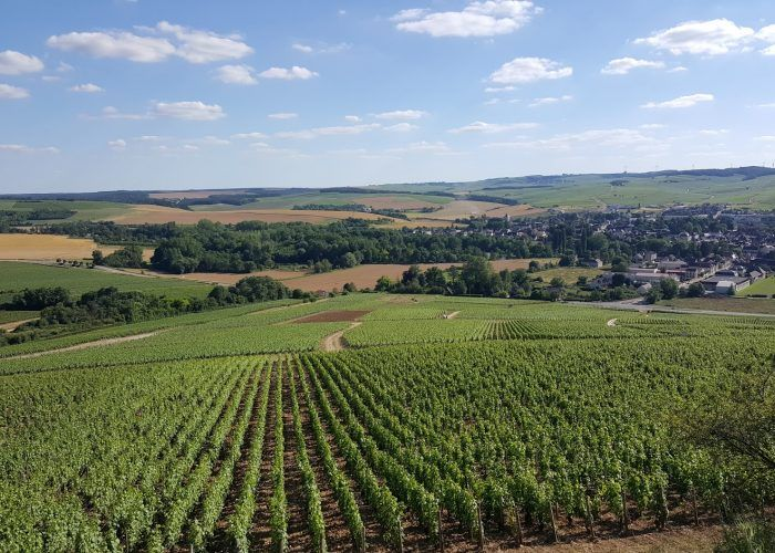 Domaine Pinson is another winner from 2015