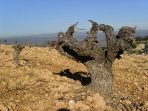 Spain Wine Guide, wine producing countries