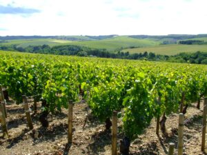 Burgundy Chablis Wine Guide