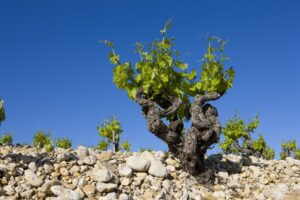 wine producing region of france, Mediterranean France Wine Guide