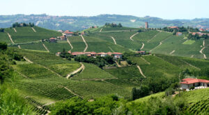 Italy Wine Guide, naked wines reviews