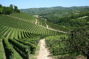 Piedmont & North West Italy Wine Guide