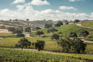 California Central Coast & Sierra Foothills Wine Guide