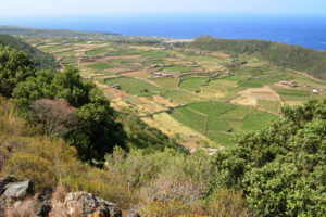 Southern Italy Wine Guide