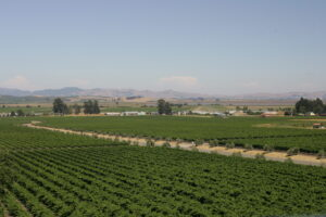 California North Coast Wine Guide