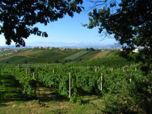 Central Italy Wine Guide