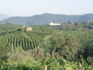 North-East Italy Wine Guide, english wine producers
