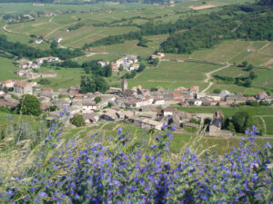 Burgundy Mâconnais Wine Guide