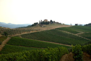 Tuscany Wine Guide, wine producing countries